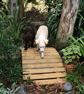 Two Dogs Footbridge