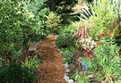 Path Mulch Cordyline