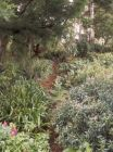 Wattle Garden Path Long