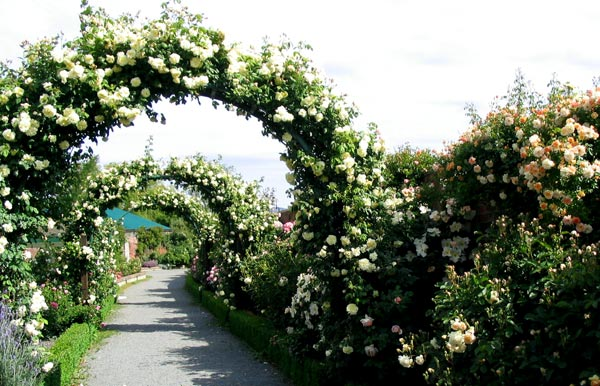 http://images.mooseyscountrygarden.com/botanical-gardens/rose-arches.jpg