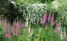 Foxgloves Clematis