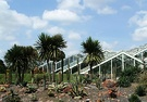 Kew Glass House Cordyline