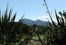 Mountain Flax Scotland