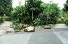 Paving Tropical Plants