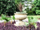 Urn Cordyline Palms