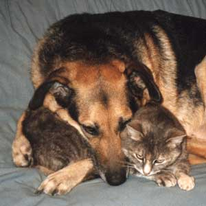 pictures of cats and dogs