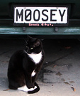 Black Moosey Cat