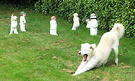 Bored Dog Cricketers