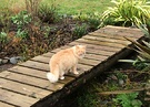 Bridge Homemade Cat