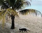 Cat Palm Beach