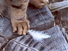 Cat Paw Feather