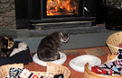 Cats Log Burner