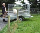 George Sheep Trailer
