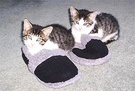 Kitten Slippers