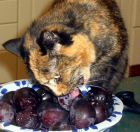 Mugsy Plum Eating