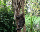Tabby Cabbage Tree