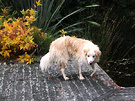 Wet Dog Decking