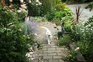 White Path Cat