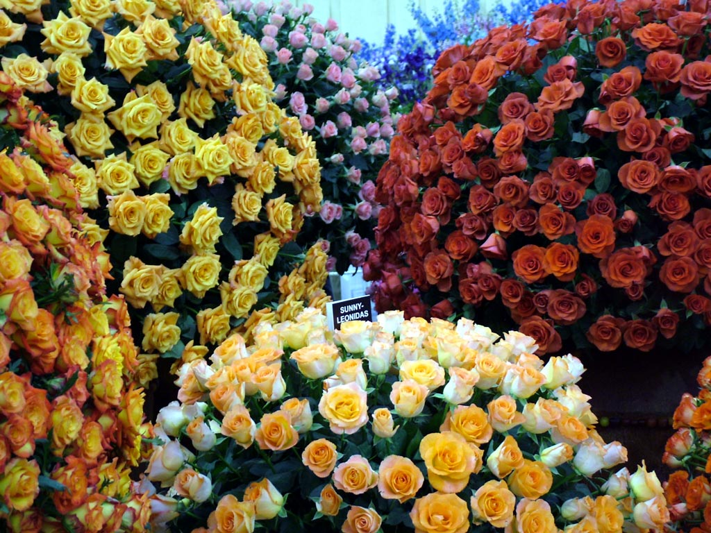 2004 - Chelsea flower show gold medals ...