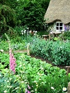 Foxgloves Vegetable Patch