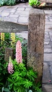 Lupins Patio Fence