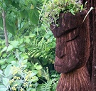 Tree Fern Maori Sculpture