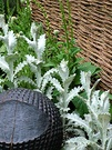 Wicker Fence Perennials