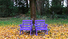 Autumn Purple Seats