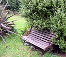 Garden Bench Pittosporum