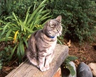Low Garden Seat Stumpy Cat