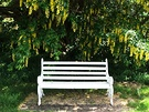 White Bench Laburnum