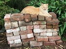 Bricks Ginger Cat