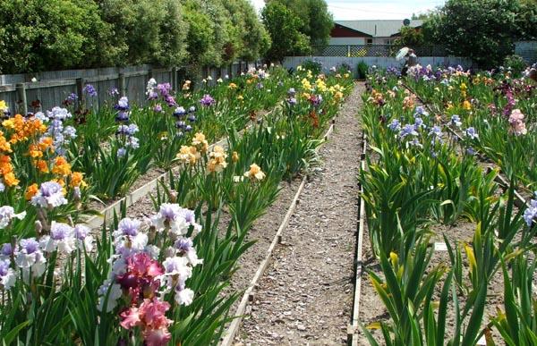 Gardening articles for Irish garden designs