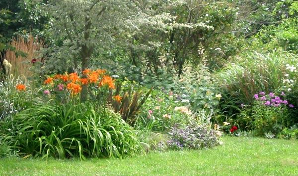 Planting Under Elm Trees : Gardening articles