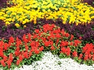 Bedding Annuals Colourful