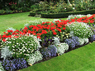 Bedding Flower Display
