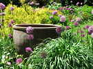 Best Garden Chanticleer