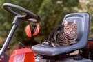 Lawn Mowing Sifter Cat