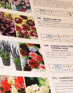 Page Seed Catalogue