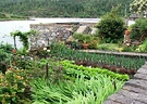 Plockton Garden Vegetables