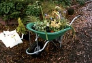 Shifting Wheelbarrow Plants