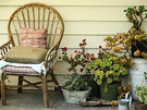 Verandah Chair Succulent