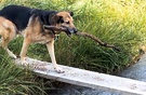 Water Plank Walk Dog