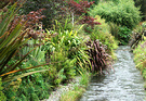 Water Stream Plants