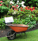 Wheelbarrow Rhododendron