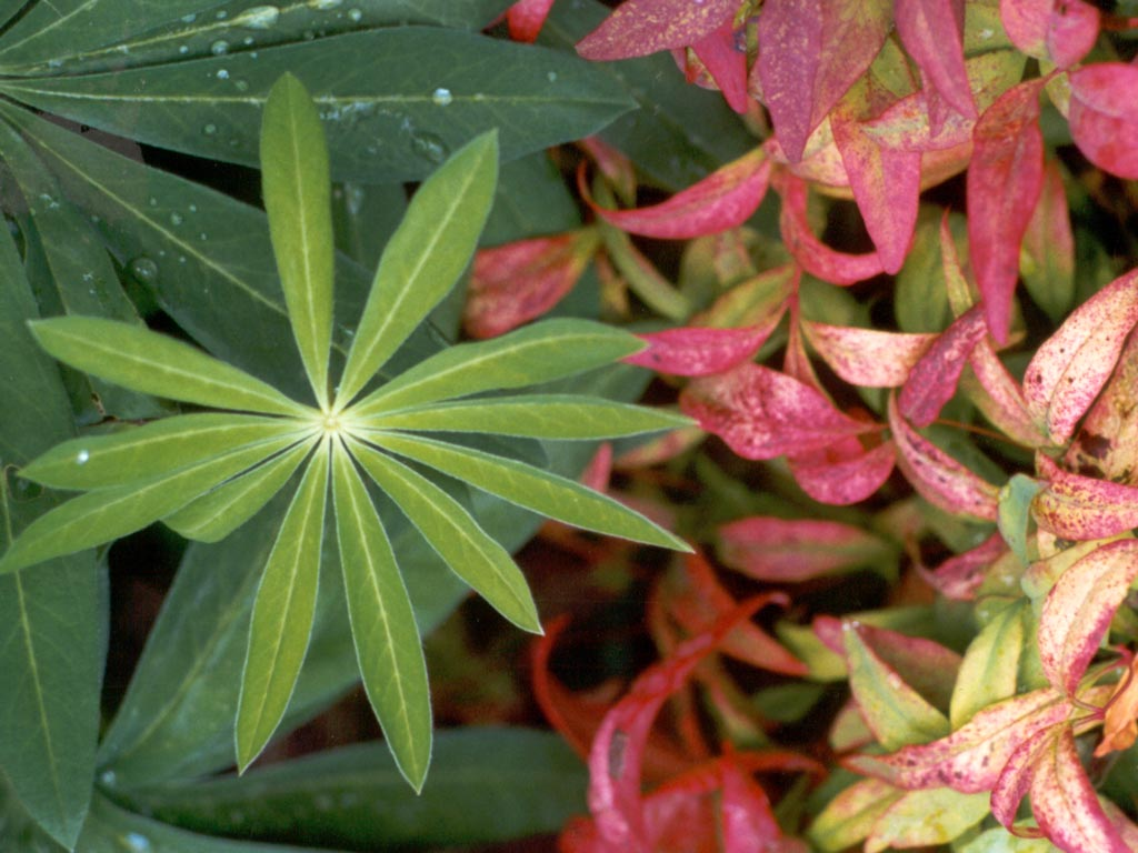 how to clean outdoor plant leaves