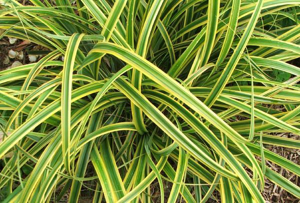 Foliage plants - Plantas de interior resistentes ...