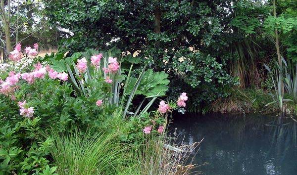 Perennial plants for Perennial pond plants