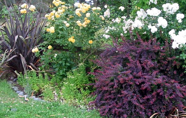 Shrubs for Low maintenance bushes for shade