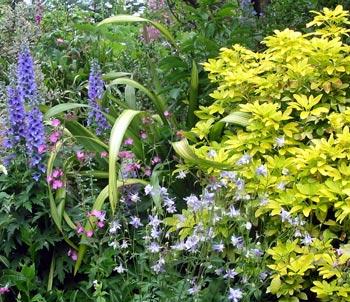 Shrubs for Plants for small gardens